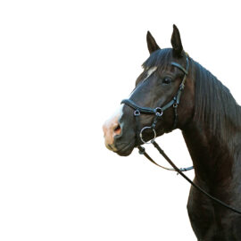 McAlister – Competition Bridle