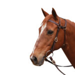 Extended Head Barcoo 3/4″ Bridle