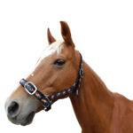 Eureka – Equine Headstall