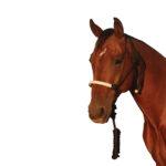 Navaho – Laced Contrast Nylon Halter & Lead