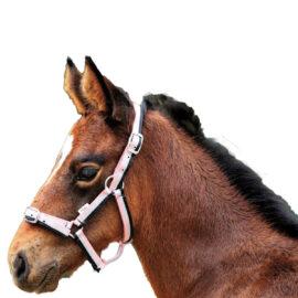 Eureka – Foal Three Colour Headstall