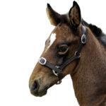 Eureka – Foal Leather Halter