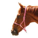 Navaho – Johnson Adjustable Rope Halter