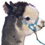 Eureka – Alpaca Lead & Headstall