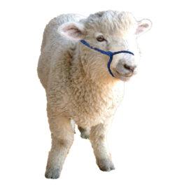 Eureka – Alpaca/Sheep/Miniature Halter